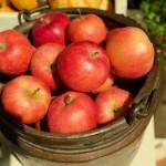 食欲の秋!おいしく&楽しく秋の食育を保育に取り入れよう!