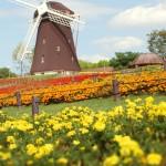 オランダ発教育法!自ら決断できる力を養うピラミッドメソッドとは?